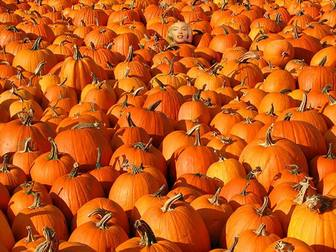 Play with this picture to hide an image in a pile of pumpkins