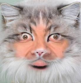 Ponha seu rosto na face de um gato editando este efeito livre