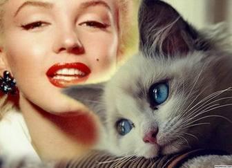 Effet dun bleu-yeux chat mignon pour ajouter en ligne effet photo de votre photo à modifier avec votre photo préférée si vous aimez les chats et part dans vos réseaux sociaux gratuitement. Un effet mignon avec un chaton yeux bleus que vous pouvez modifier à votre image en quelques étapes.