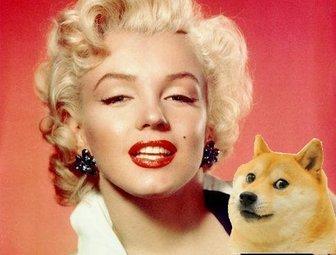 Aufkleber der meme Dogen