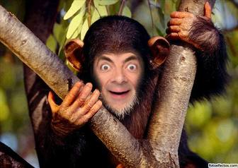 Ejemplo: Photomontage fun to put a face to a monkey in a tree. Save it or send it as a joke.