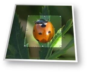 Herramienta para recortar fotos e imágenes online.