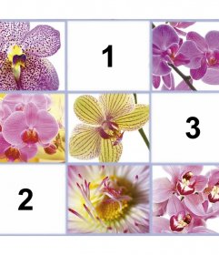Collage gratis con bellas rosas para añadir tres de tus fotos