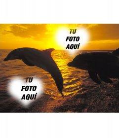 Collage para dos fotos en forma de corazón y delfines saltando