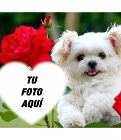 Montaje de amor con un lindo cachorro y flores rosas para añadir tu foto