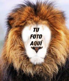 Fotomontaje de un león para poner tu cara online