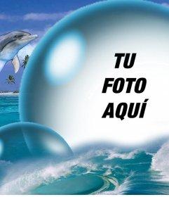 Delfines y una gran burbuja para poner tu foto gratis