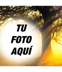 Edita este montaje de un atardecer con un árbol subiendo tu foto