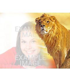 Fotomontaje con un león y fondo amarillo para poner tu foto en la zona izquierda fundido con la imagen