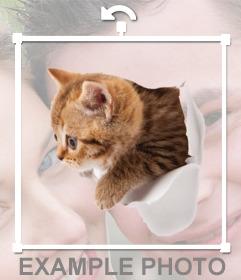 Sticker de un gatito con efecto de que está saliendo de tu foto