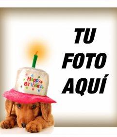 Fotomontaje Y Marcos De Cumpleaños Para Perros Fotoefectos