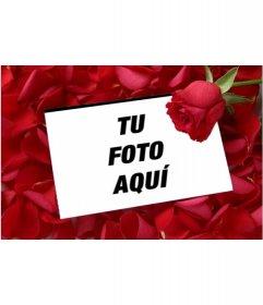 Pon una foto en una Carta de amor con una rosa y fondo de pétalos de rosa.
