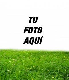 Marco para fotos de césped verde en tu foto