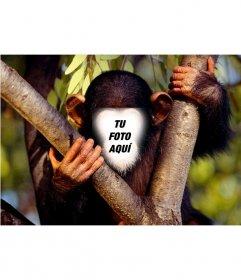 Fotomontaje divertido para poner una cara a un mono subido en un árbol. Guárdalo o envíalo como broma.