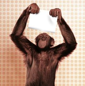 Fotomontaje de mono con tu foto
