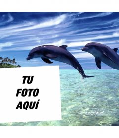 Postal vacacional para editar con tu foto y añadirla junto a dos delfines