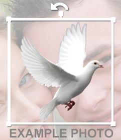 Paloma blanca volando para editar en tus fotosor