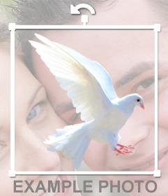 Pegatina online de una paloma blanca para ponerla en tus fotos sin necesidad de descargar nada.