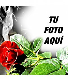 Marco para fotos personalizable. Rosa roja, ideal para enamorados.