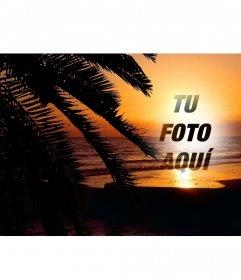 Puesta de sol en un paisaje idílico en el que vemos una playa tras unas hojas de palmera para poner una foto online y crear un collage