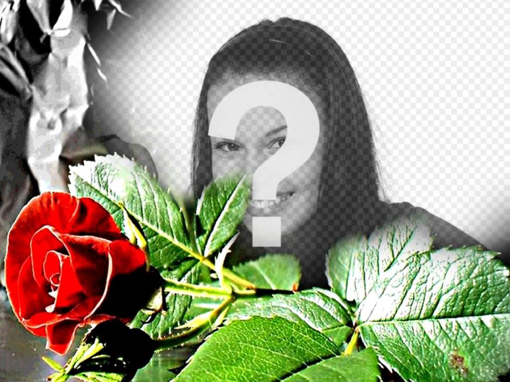 Marco para fotos personalizable. Rosa roja, ideal para enamorados ...