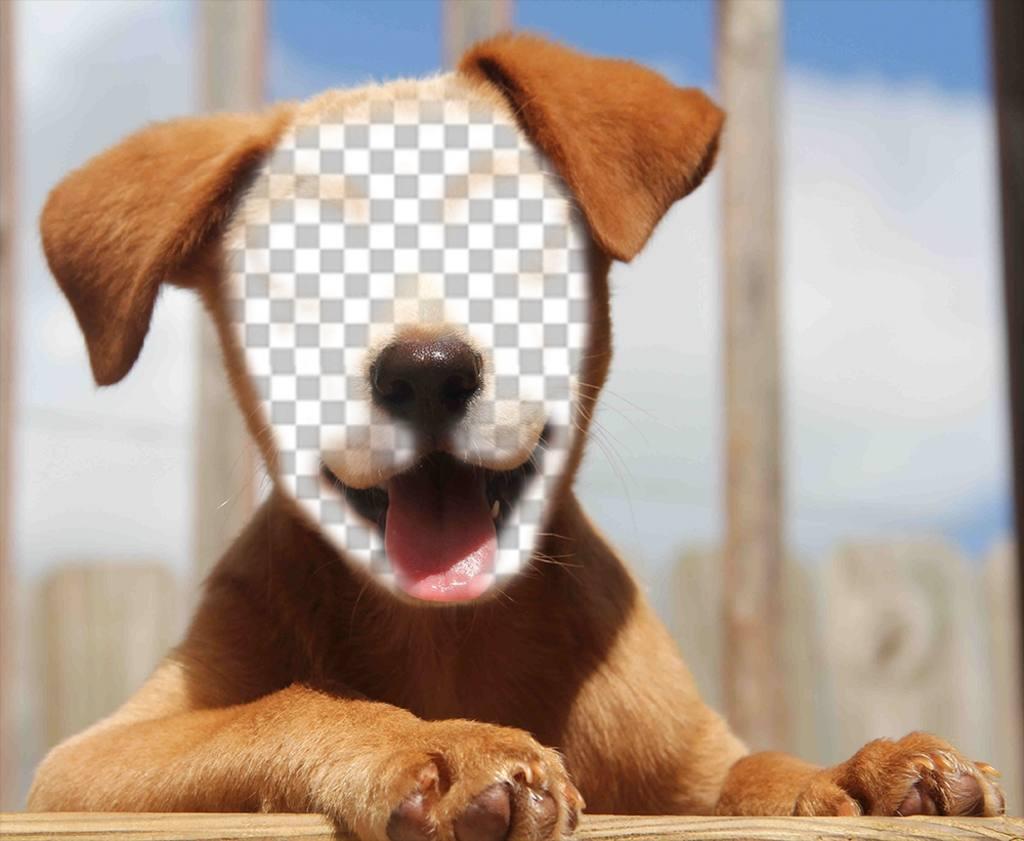 Añade tu cara a la cara de un hermoso perrito con este efecto