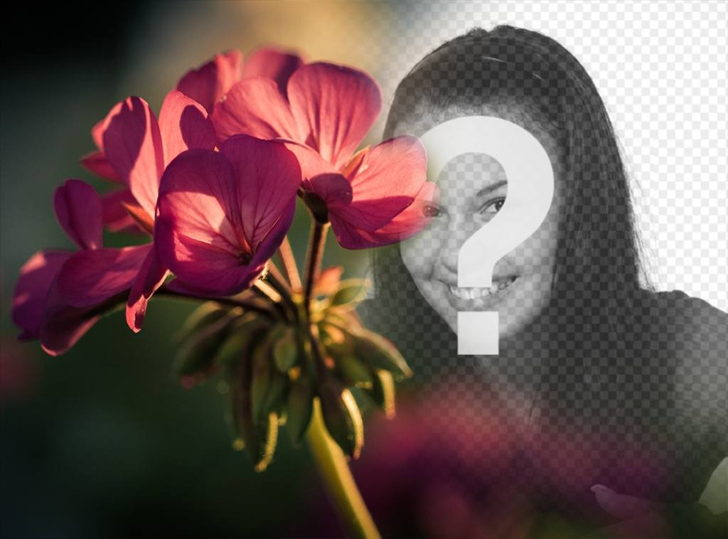 foto efecto gratis fotos un filtro flor