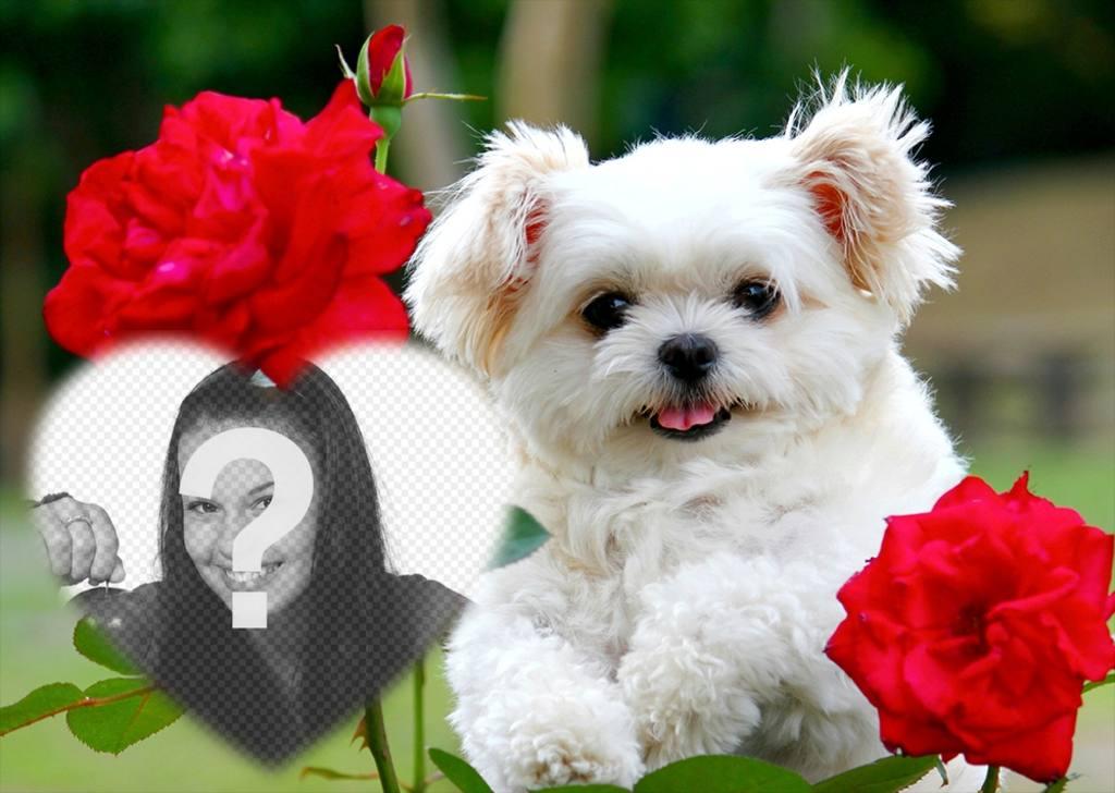 montaje amor un lindo cachorro flores rosas anadir foto