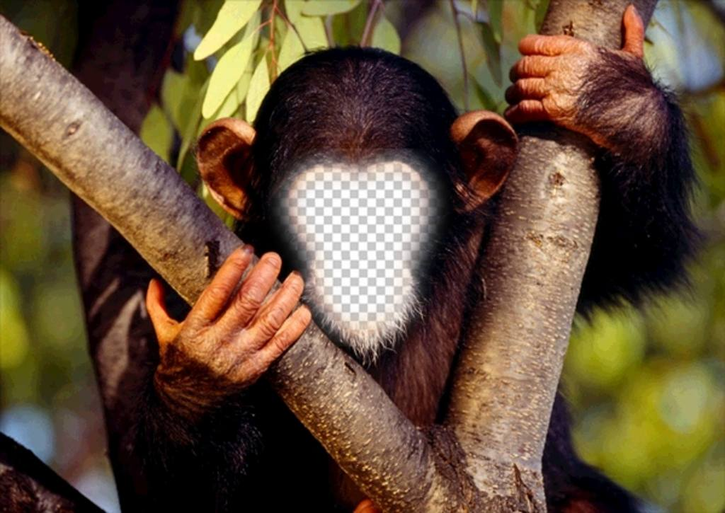 fotomontaje divertido poner cara un mono