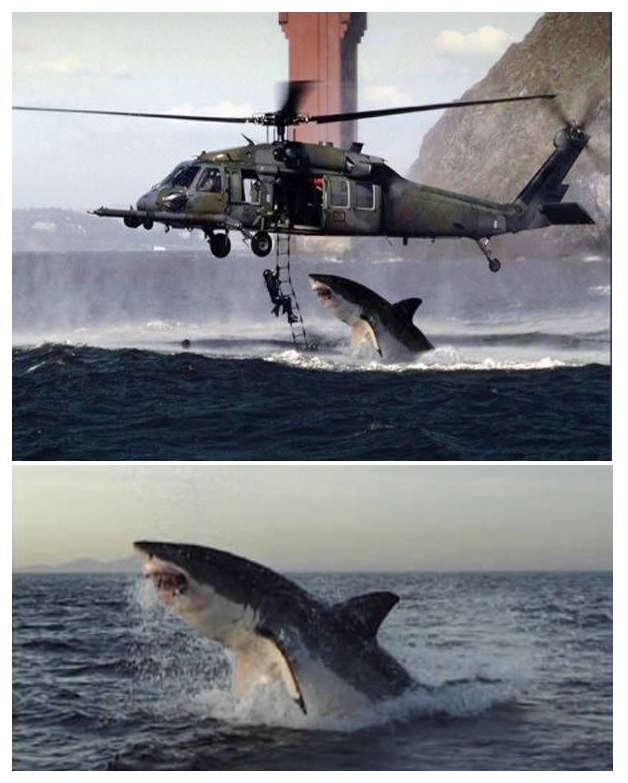 best service 92847 3bba5 Foto tiburon blanco atacando helicoptero