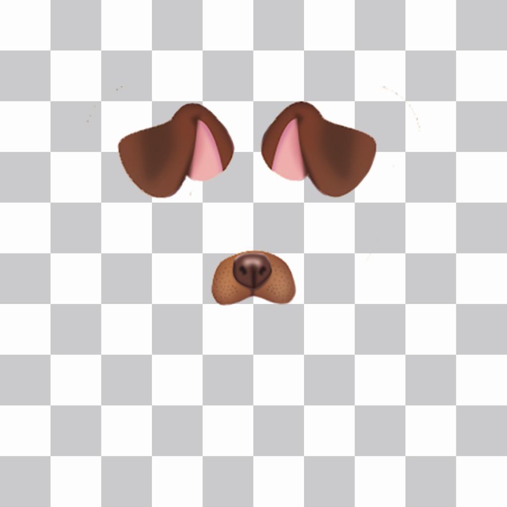 Pega las orejas y nariz de un perrito en tu foto gratis